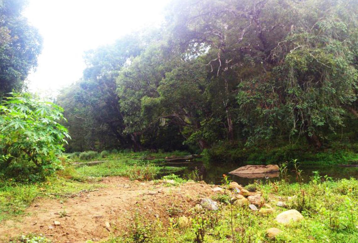 Kodaikanal Elephant Valley - Jungle